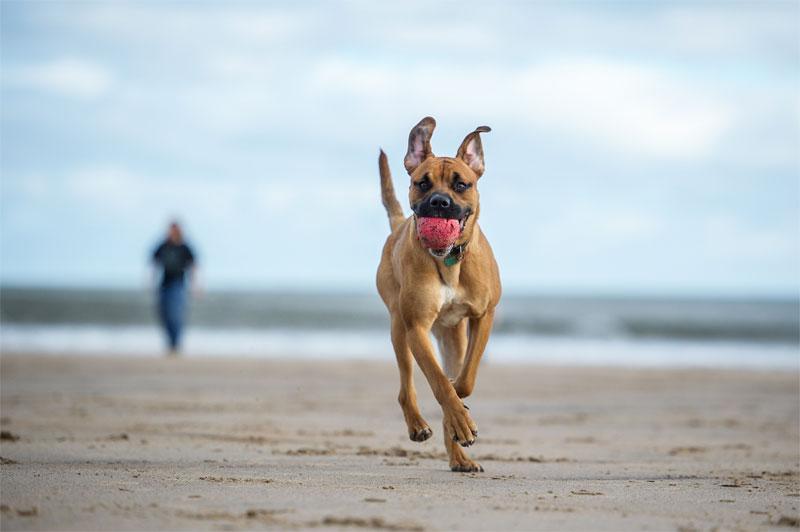 dog-beach-safety-strip1